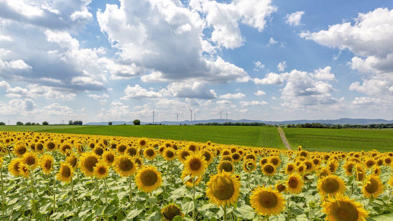 https://grupoct.com/wp-content/uploads/2020/09/sunflower-field-4508377_1920-1280x720.jpg